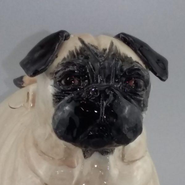 pug face close up